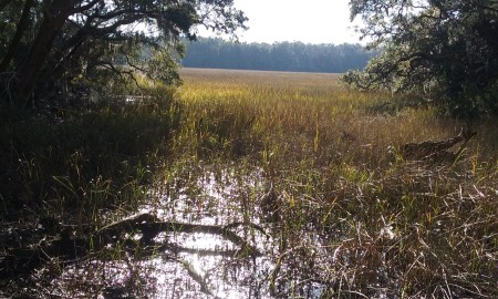 FrancesMarionForest_Swamp